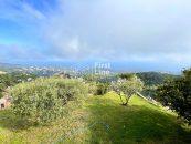 garden panoramic view